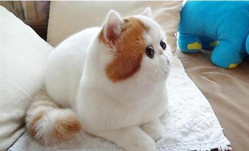 呆萌肥胖动物图片