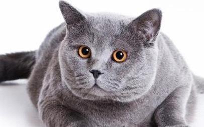 猫皮肤病真菌